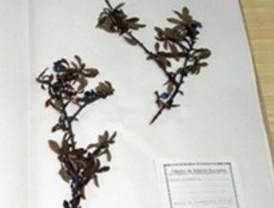 Herbario de la Facultad de Biología de la Universidad de Alcalá
