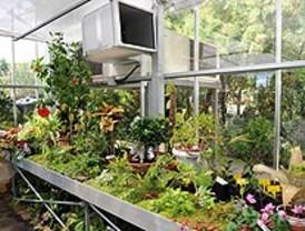 Las plantas de los pozueleños reciben el alta