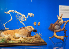 El Museo de Ciencias Naturales expone la fauna del Parque Nacional de Guadarrama
