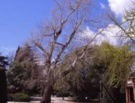 Denuncian 'talas injustificadas' de árboles en Retiro y Carabanchel