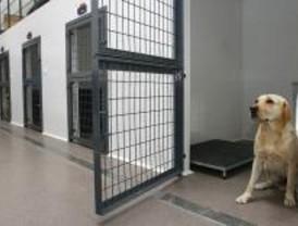 La Unidad Canina de Las Rozas ayudará a los bomberos de la Comunidad
