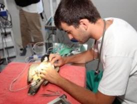 El hospital para fauna salvaje atiende a más de 1.200 animales heridos en seis meses