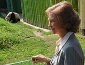 Los pandas reciben una visita real