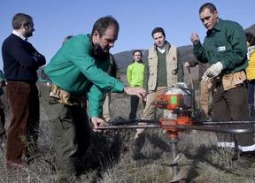 260.000 árboles para reforestar el monte calcinado en Robledo de Chavela