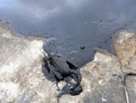 La laguna del aceite, una trampa mortal para las aves