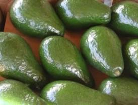Extraen neuroprotectores y antioxidantes del mango, la chirimoya y el aguacate