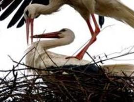 Retiran en Galapagar un nido de cigüeña del campanario que pesaba 2.000 kilos