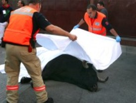 Muere un toro durante los encierros de Leganés