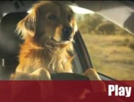Un perro se da a la fuga en la campaña de El Refugio