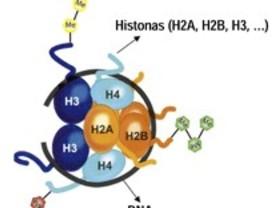 La vitamina D también regula la epigenética