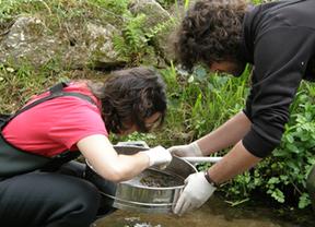 Analizan cómo un mosquito 'todoterreno' responde a la contaminación fluvial gallega