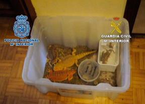 Policía y Guardia Civil rescatan 125 reptiles de una vivienda de Getafe