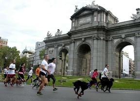 Cientos de corredores y mascotas participan en el 'perrotón'