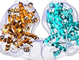 Enzima de estructura cristalina revela relaciones inesperadas