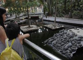 Atocha, un estanque de tortugas abandonadas