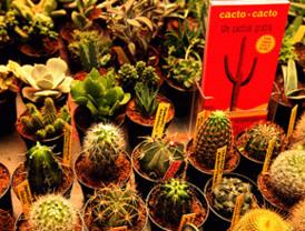 Cactus de película