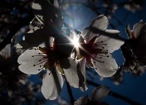 Entre parques y jardines: la llegada de la primavera invita al envío de flores