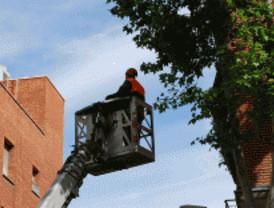 60 calles sufrirán cortes por la poda de árboles