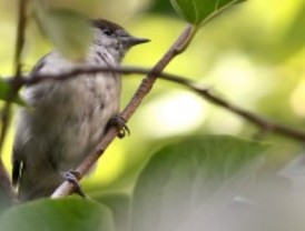 El Jardín Botánico celebra el Día de las Aves con una ruta ornitológica