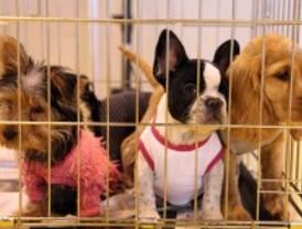 Casi el 60% de las tiendas de mascotas presenta irregularidades