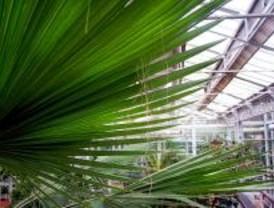 El Palacio de Cristal contará con 848.200 euros para conservar su flora y fauna