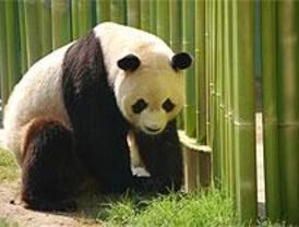 El zoo enseña a los niños a divertirse aprendiendo con los animales