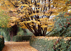 Visitas guiadas gratuitas los fines de semana al Jardín Botánico en octubre