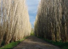 De paseo por los sotos de Aranjuez