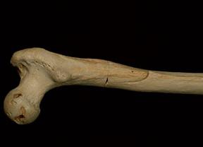 Dos investigadores de la UAH participan en el descubrimiento del ADN humano más antiguo
