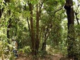 Villaviciosa quiere que se declare Monte de Utilidad Pública dos zonas verdes