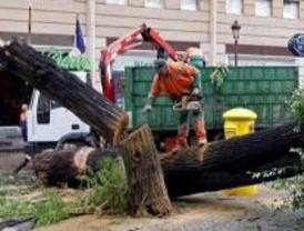Dos ancianos heridos por al caerles árboles encima por el viento