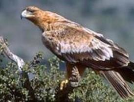 Arranca el programa de educación ambiental para la recuperación del águila imperial ibérica