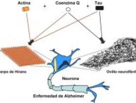 Papel del coenzima Q en la enfermedad de Alzheimer