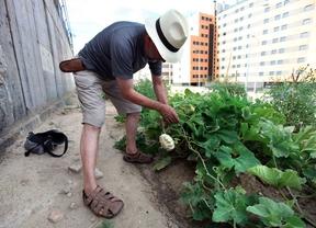 El Ayuntamiento saca a concurso las obras de 17 parcelas para huertos