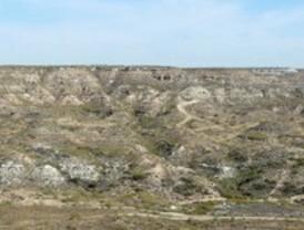 Yacimiento paleontológico de dos millones de años