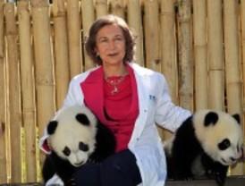 Un nuevo mundo para los pandas del zoo