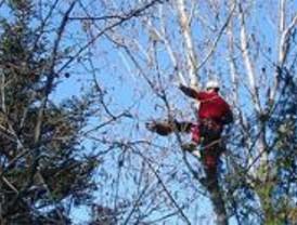 GERA rescata un halcón que escapó y pasó la noche enganchado en un árbol
