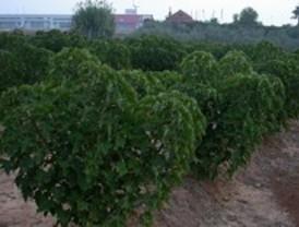 Riego con agua residual depurada para producir biocombustible