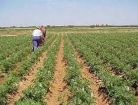 Nace en Madrid una nueva organización agraria de ámbito nacional