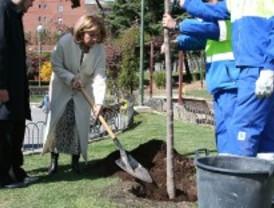 El Ayuntamiento asegura haber plantado casi un millón de árboles desde 2007
