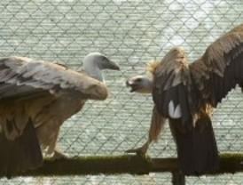 Más de 7.200 animales silvestres heridos han sido atendidos por la Comunidad en 2011