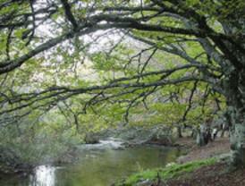 Madrid celebra el Día Forestal Mundial