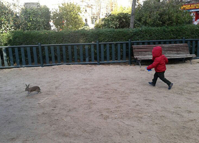 Un conejo encuentra refugio en la plaza de Olavide
