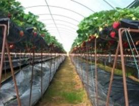 Los agricultores madrileños aprenden el cultivo hidropónico, que aumenta la producción un 20%