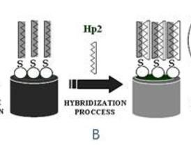 La Autónoma investiga sobre las posibles mutaciones en el ADN