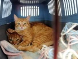 Cerca de cuatrocientas mascotas se adoptan en el Salón de la Adopción Animal