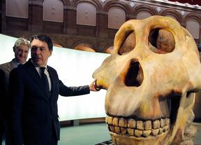 La cuna de la Humanidad, en el Museo Arqueológico Regional