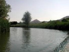 Ecologistas repobla una zona del río Henares en San Fernando
