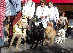 Ciegos con sus perros guía durante una protesta para pedir su acceso libre a los comercios