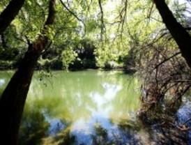 Recuperación de la ribera del río Henares